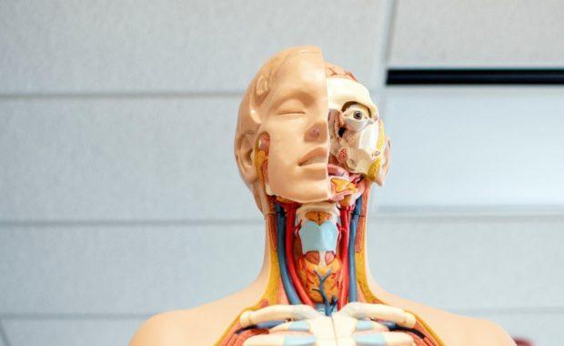 crash course anatomy and physiology skeleton