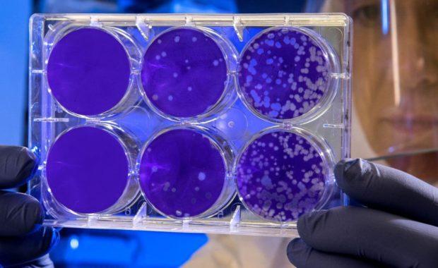 online masters in biology lab scientist