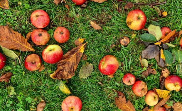 apples and leaves on grass showing biodiversity definition for biology