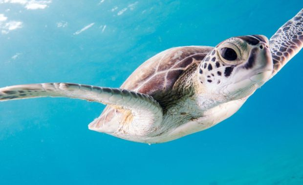 closeup of a sea turtle studied for a wildlife biology degree
